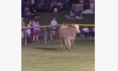 Reward offered for missing 'Moon Boom' cow